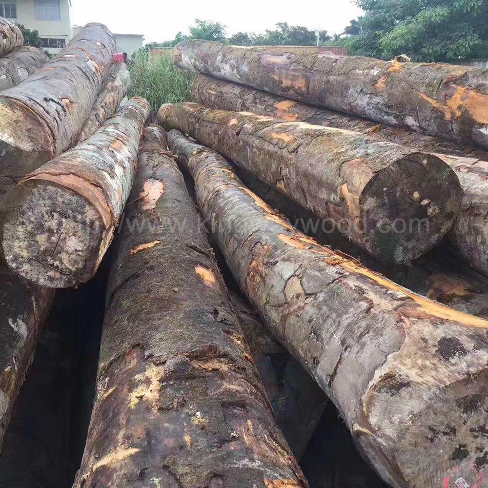 金威木业进口德国榉木原木ab级