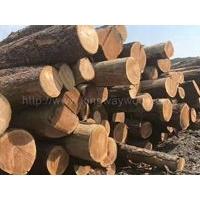 金威木业供应美国黑胡桃 樱桃木 白腊 红橡原木
