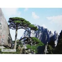 南京鑫祺软包—艺术背景系列
