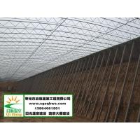 温室建设  全钢架温室大棚   寿光市启航温室