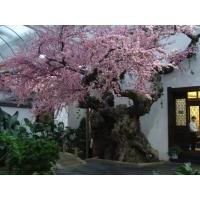 北京酒店假树施工