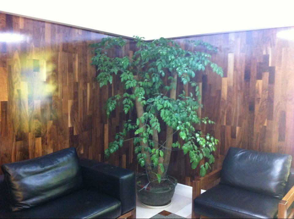 深圳圣象康树三层实木复合地板 ks8356 巴萨胡桃木