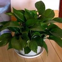 植物租赁提供_如何选择绿化租赁