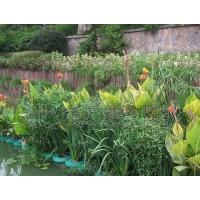 生态浮床  水生浮盆 生态浮岛