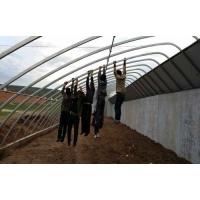 专业建造新型温室大棚及温室大棚保温墙专业制作