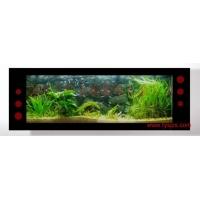 新兴行业河南郑州生态水族 生态水族壁画 生态壁画鱼缸