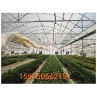 安阳腾达农业专业设计钢架蔬菜大棚 蔬菜大棚生产厂家