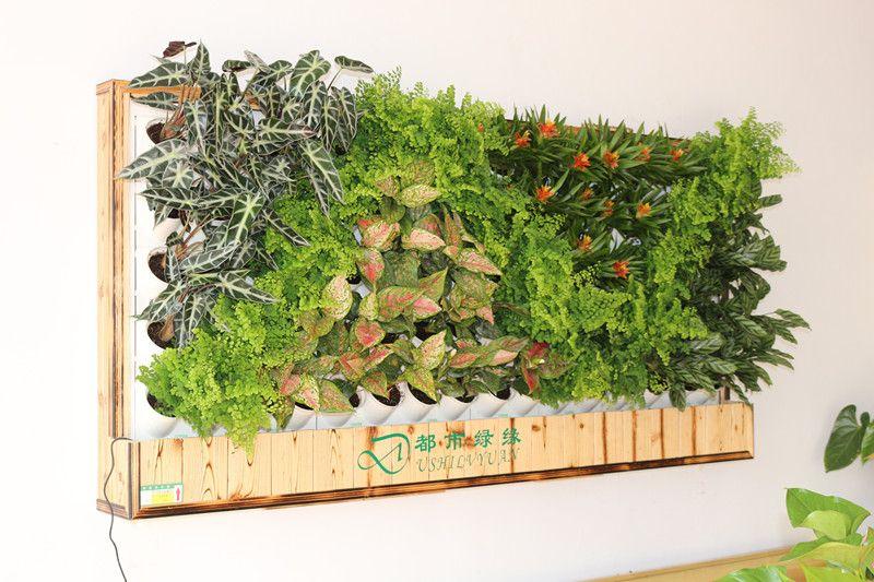 绿植手绘平面图