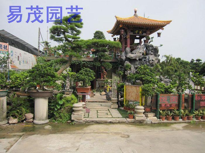 深圳室内花卉基地,深圳福田景田花场