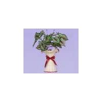 湖北武汉活性炭红心绿叶花瓶