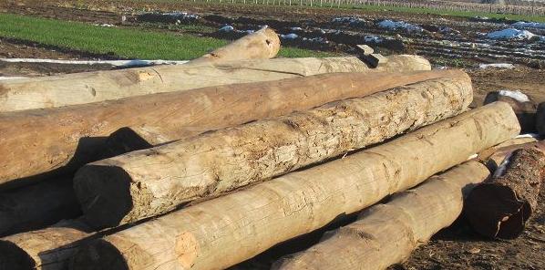 大量出售国内国内松木
