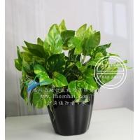 仿真金点绿萝叶假植物绿植盆栽装饰仿真小绿植盆栽室内仿真植物