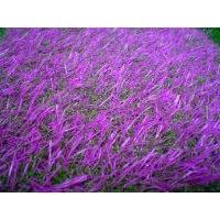 便宜人造草坪 人工草坪 草坪